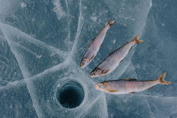 Подлёдная рыбалка на Байкале